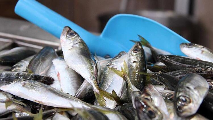 Balıkçılar 3 gün sonra denize açılacak