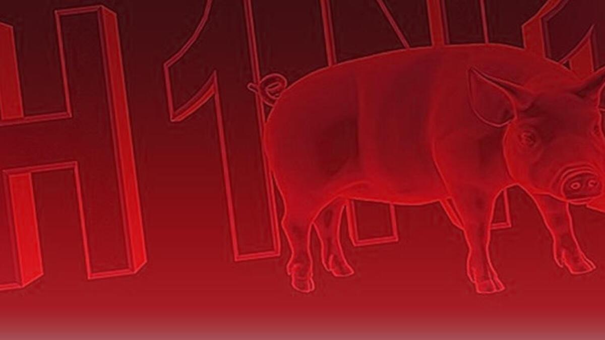 Myanmar'da domuz gribi salgını