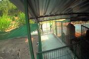 Barınağa giren hırsızlar pitbull cinsi köpekleri çalıp kaçtı