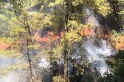 Havuzu bırakıp yangına koştular