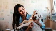 Evcil hayvanlarla aynı evde yaşamayı kolaylaştırmanın yolu bu ipuçlarında saklı