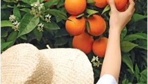 Akdeniz mavisinde portakal çiçekleri