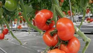 Suda domatese 5 milyon dolar harcadı