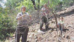 Köylülere yeni geçim kaynağı
