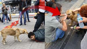 Gezi Parkındaki o köpek mi
