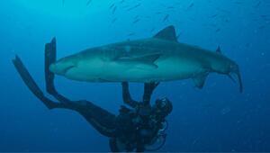 Köpekbalıklarıyla yüzecekseniz sakın bu renkleri giymeyin