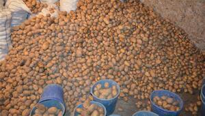 Geçen sene el yakan patates depolarda 20 kuruşa düştü
