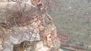 Kayalıkta mahsur kalan keçileri AFAD ekibi kurtardı