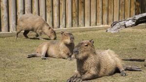 Bursa Hayvanat Bahçesi'nin Afrikalı Üyeleri