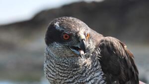 Tokat'ta Tedavisi Tamamlanan Kuşlar Doğaya Bırakıldı
