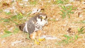Yaralı Kuşlar Yeniden Doğaya Kanat Çıpttı