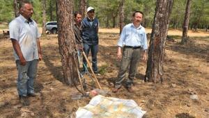 Mersin'de Orman Köylüsü Reçineden De Kazanacak