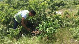 Gedizde orman köylüsü için ağaçlandırma çalışması