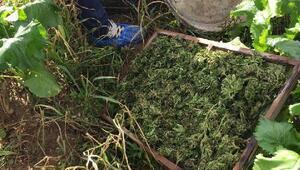 Ödemişte 2 kilo 152 gram esrar ele geçirildi