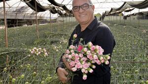 Avrupaya 50 milyon dal Noel çiçeği