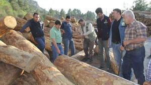 Adanada 1 milyon metreküp odun üretimi