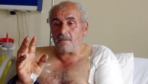 Ayı saldırısında yaralanan köylü: Ayının dilini tutup kurtuldum