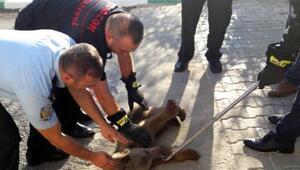 Firari yavru ayıyı itfaiyeciler yakaladı