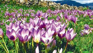 Sonbaharda içimizi açacak 66 güzel şey