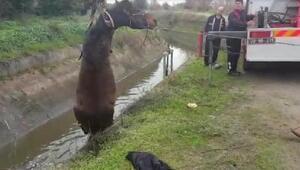 Sulama kanalına düşer atı itfaiye ekipleri kurtardı