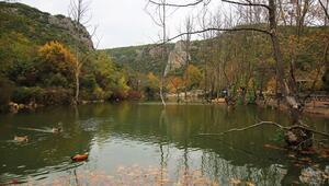 Sarı ve kızıl karışımı: Kocaeli Tabiat Parkları