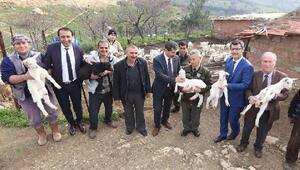İzmirde orman köylüsüne Saanen tekesi desteği