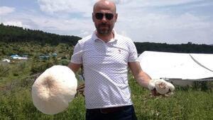 Kütahya'da 2 kilo ağırlığında dev mantar