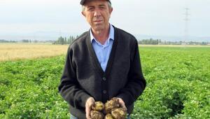 Maliyet artıp, ekim alanı azalınca, patates fiyatı tavan yaptı