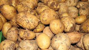 Bakan Fakıbabadan patates açıklaması