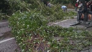Bartında rüzgar ağaçları devirdi, çatıyı uçurdu: 1 yaralı