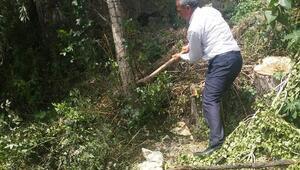 Bitliste vatandaşların isteği üzerine kavak ağaçları kesildi
