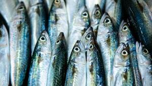 Balığın tazeliğini anlamanın püf noktaları