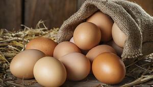Yumurta kanatlandı