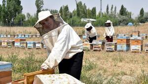 Kadın arıcıların ürettiği bal, marka oldu