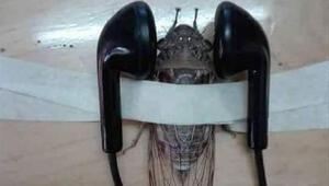 Öğretmenden tepki çeken ağustos böceği paylaşımı