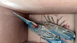 Sultan Sazlığında yaralı bulunan kuşlara tedavi