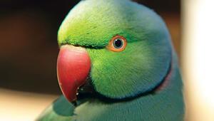 Belki üstümüzden bir papağan geçer