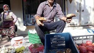 Kazdağlarında toplanan ayı mantarı köylülerin geçim kaynağı
