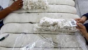 Sulama yatırımları pamuk üretimine yaradı