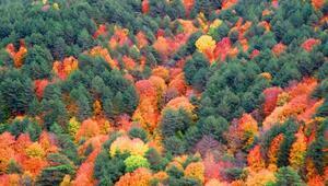 Kaz Dağları'nda sonbahar güzelliği