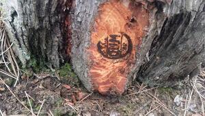 OGMden damgalı dikili ağaç atağı