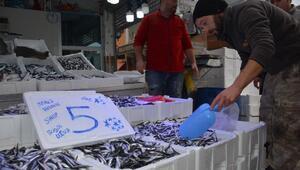 Karadeniz'de hamsi bereketi; kilosu 10 liradan 5 liraya geriledi