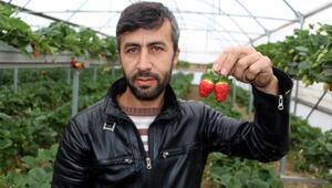 Kaynak işçisi, çilek serası kurup, 3 ayda 3 ton hasat yaptı