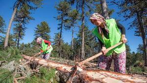 Ormanda erkeklerle birlikte odun kesiyorlar
