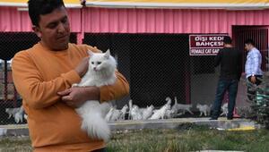 21 yıldır Van kedilerine emek ve gönül veriyor