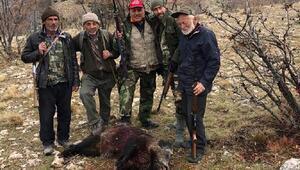Sürek avında 43 domuz vuruldu