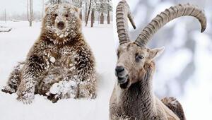 Zemheri soğukları savaşçıları