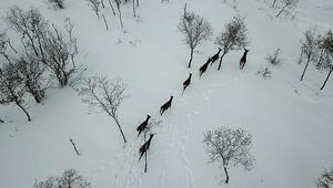 Türkiyenin ilk fauna tanıtım alanında kış güzelliği