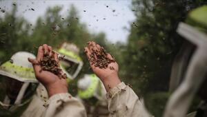 Türkiyenin yıllık bal üretimi 110 bin ton