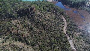 Buseyi dereye savuran hortum antik kentte başlamış, 1500 ağacı devirmiş